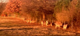 Big Oak Rescue Farm: Donkeys stay warm in the sun